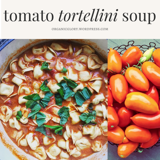 tomato tortellini soup2 (1).png